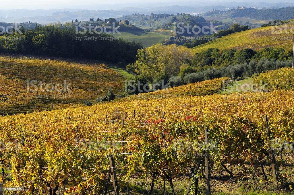 Vineyard in Fall,Tuscany Landscape royalty-free stock photo