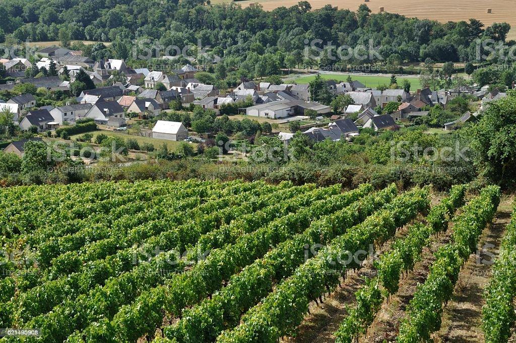 Vineyard in France stock photo