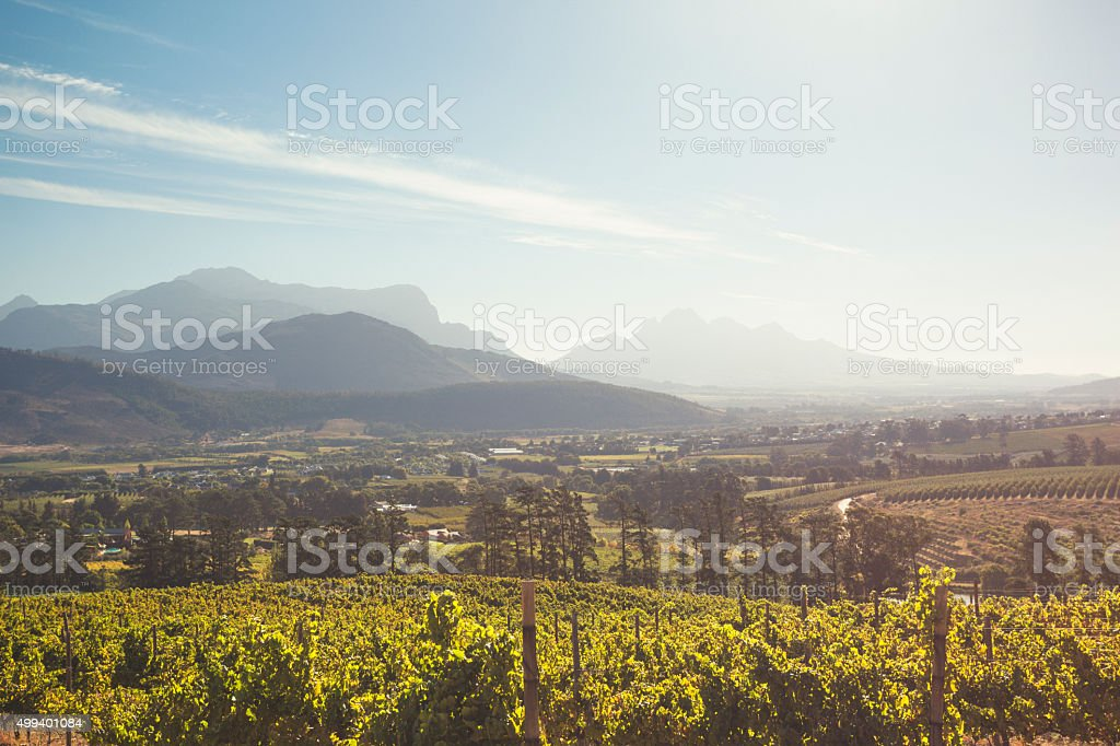 Vineyard in Franschhoek Valley, South Africa stock photo