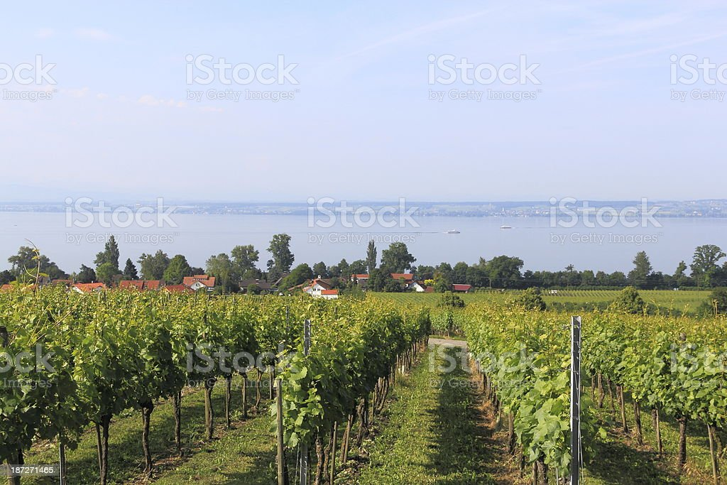 Vineyard in Hagnau stock photo