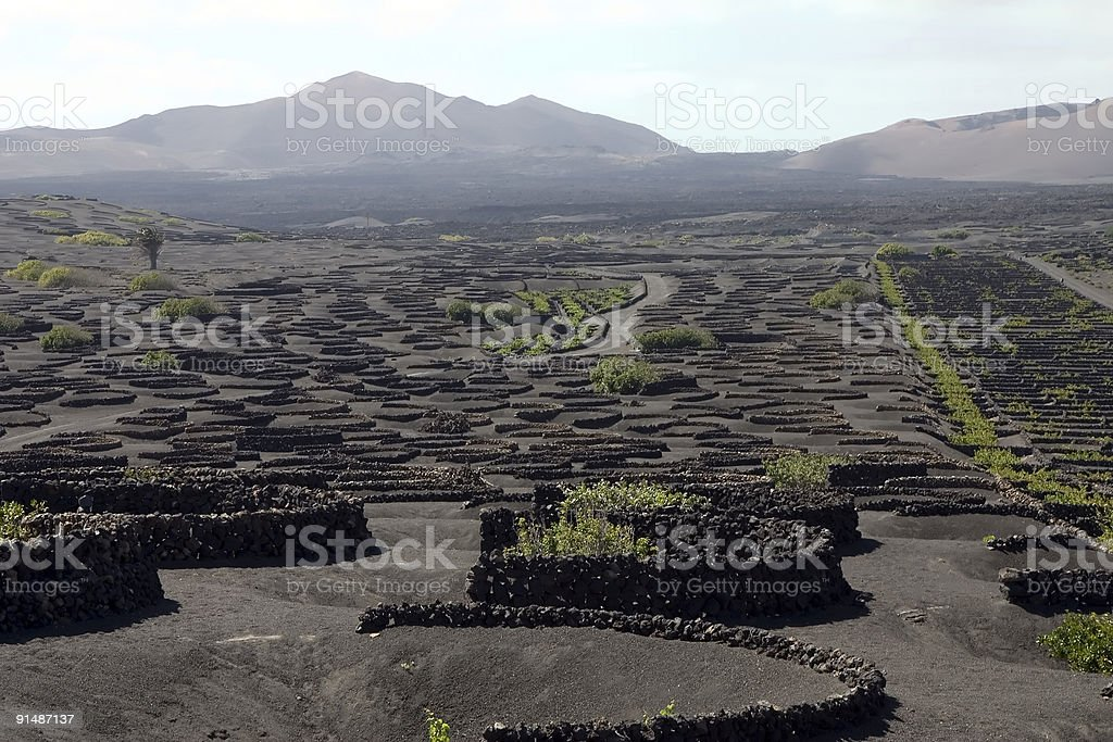 Vineyard in Lanzarote royalty-free stock photo