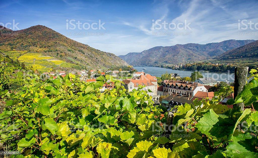Vineyard in Lower Austria stock photo