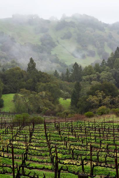 Vineyard in Mendocino, California