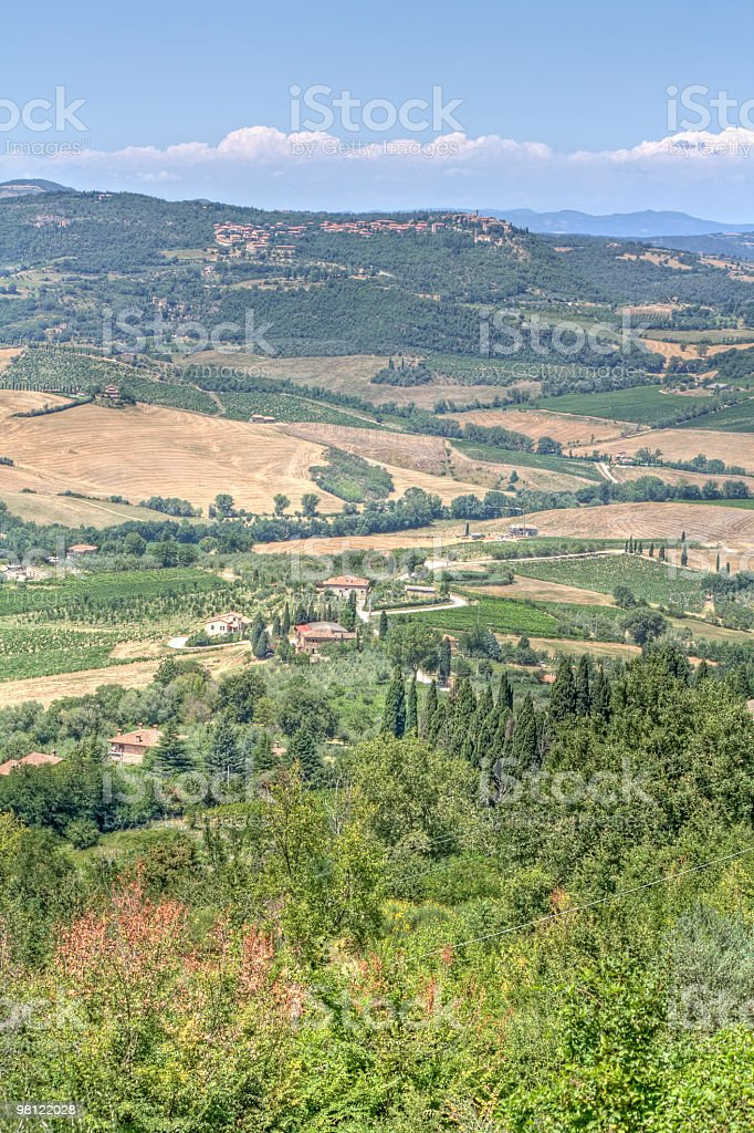 Vineyard in Montepulciano ( Tuscany,Italy) royalty-free stock photo