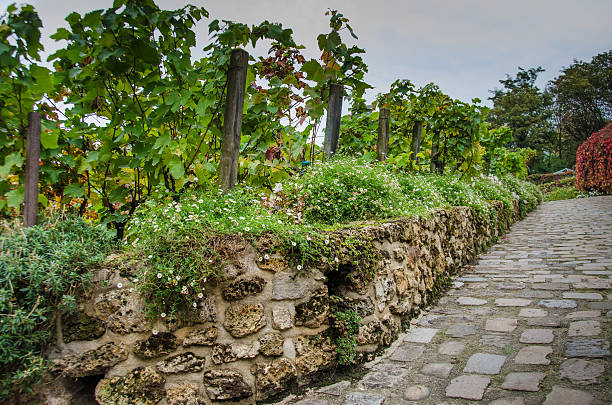 Vineyard in Montmartre on Rue des Saules in Paris stock photo
