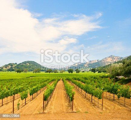 Beautiful  Vineyard in Napa Valley winery, California