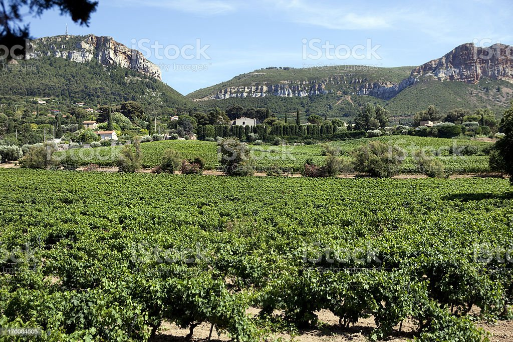 Vineyard in Provence near Cassis France stock photo