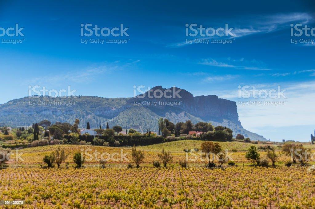 Vineyard in Provence stock photo