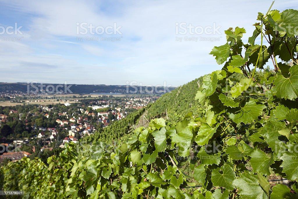 Weingut in Radebeul. – Foto