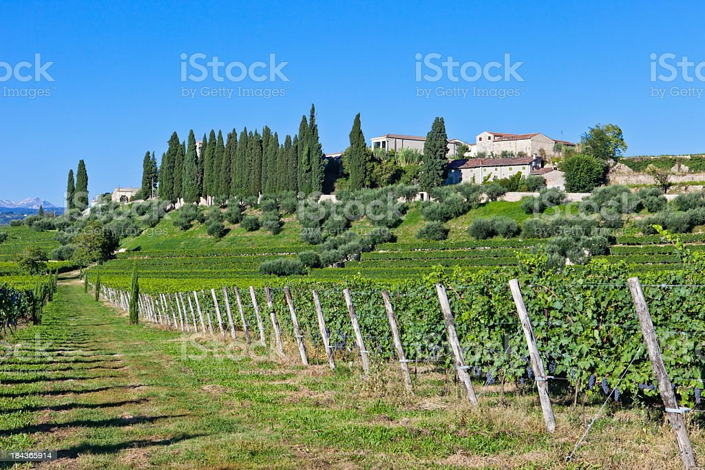 Vineyard In September, Valpolicella stock photo