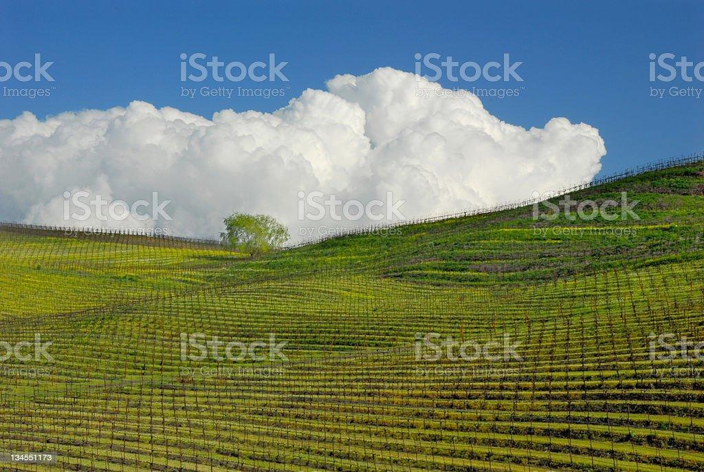 Vineyard in Sonoma royalty-free stock photo
