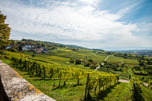 Vineyard in Southern Germany