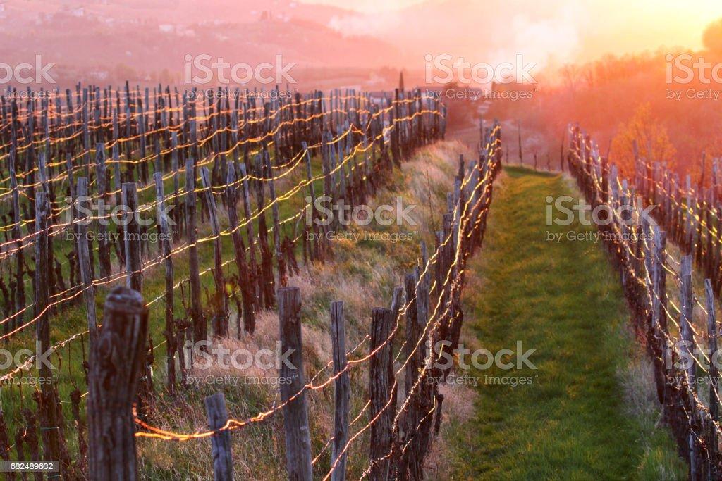 vineyard in spring light Стоковые фото Стоковая фотография