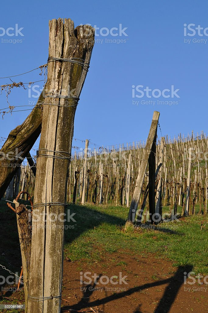 Vineyard in spring morning light, southern Styria, Austria stock photo