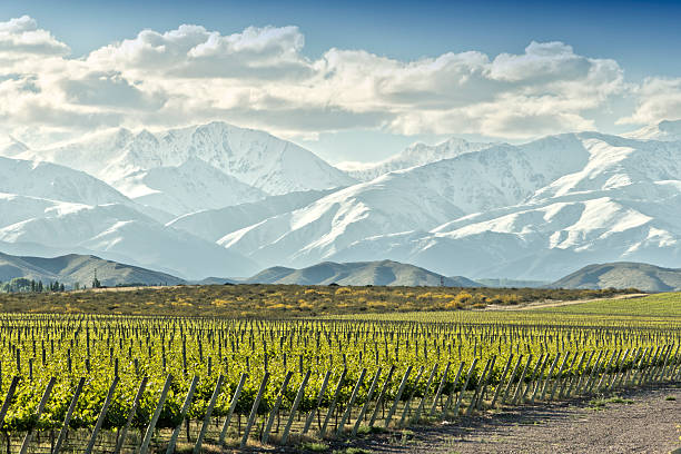 Vineyard in springtime Expanse of vineyard at foot of the snowy Andes. Uco valley, Tupungato, Mendoza, Argentina. Argentina stock pictures, royalty-free photos & images