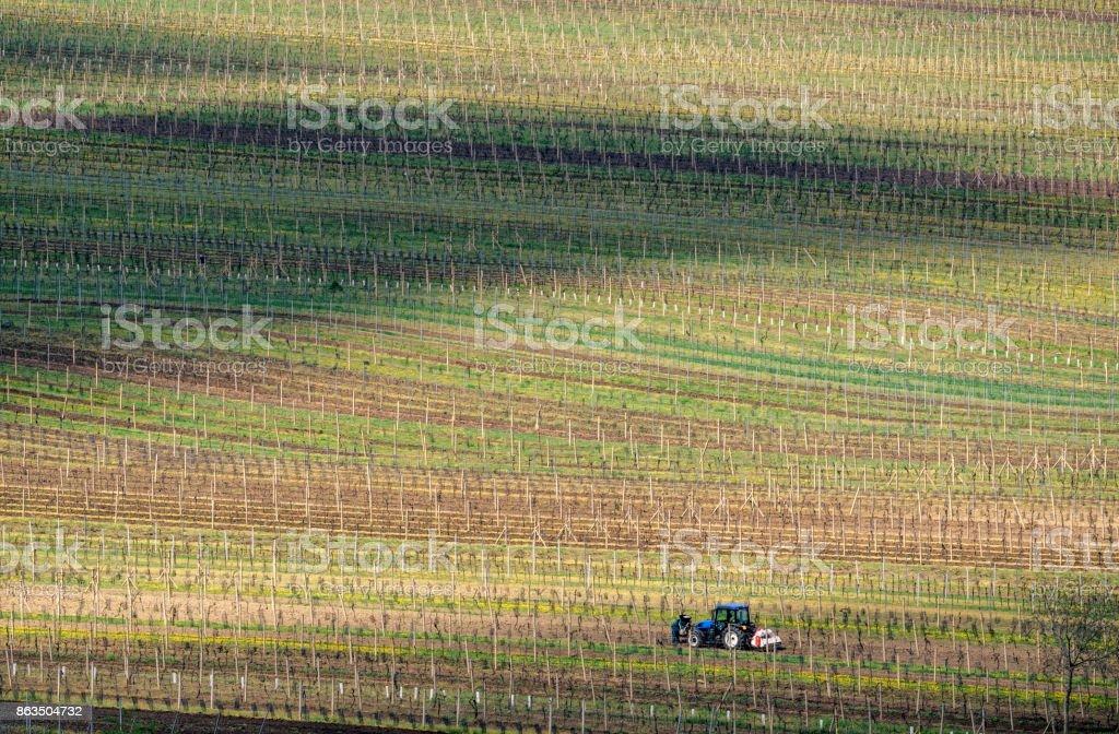 Vineyard in the area Velke Bilovice, the largest wine village in Moravia, Czech Republic stock photo