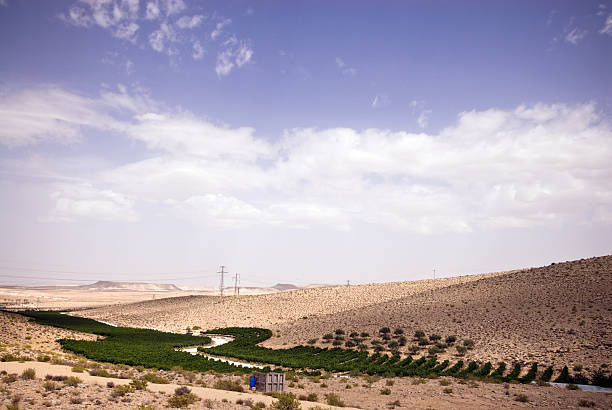 Vineyard in the Desert Vineyard in the desert with distant hills and electrical poles. negev stock pictures, royalty-free photos & images