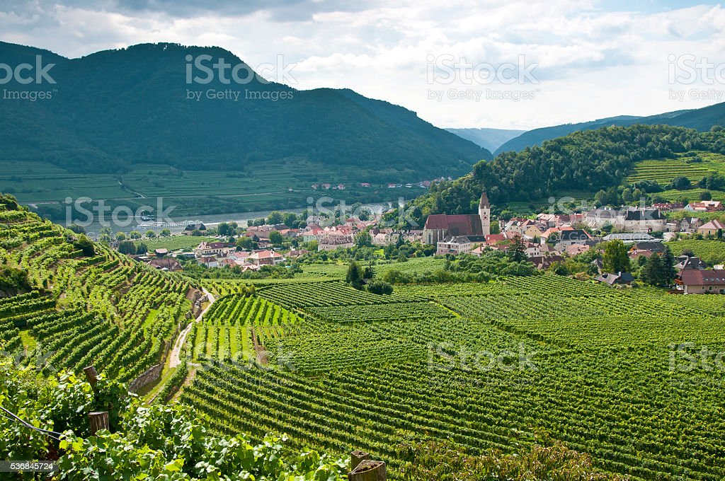 Vineyard in the famous Austrian winegrowing area Wachau (Spitz), Austria stock photo