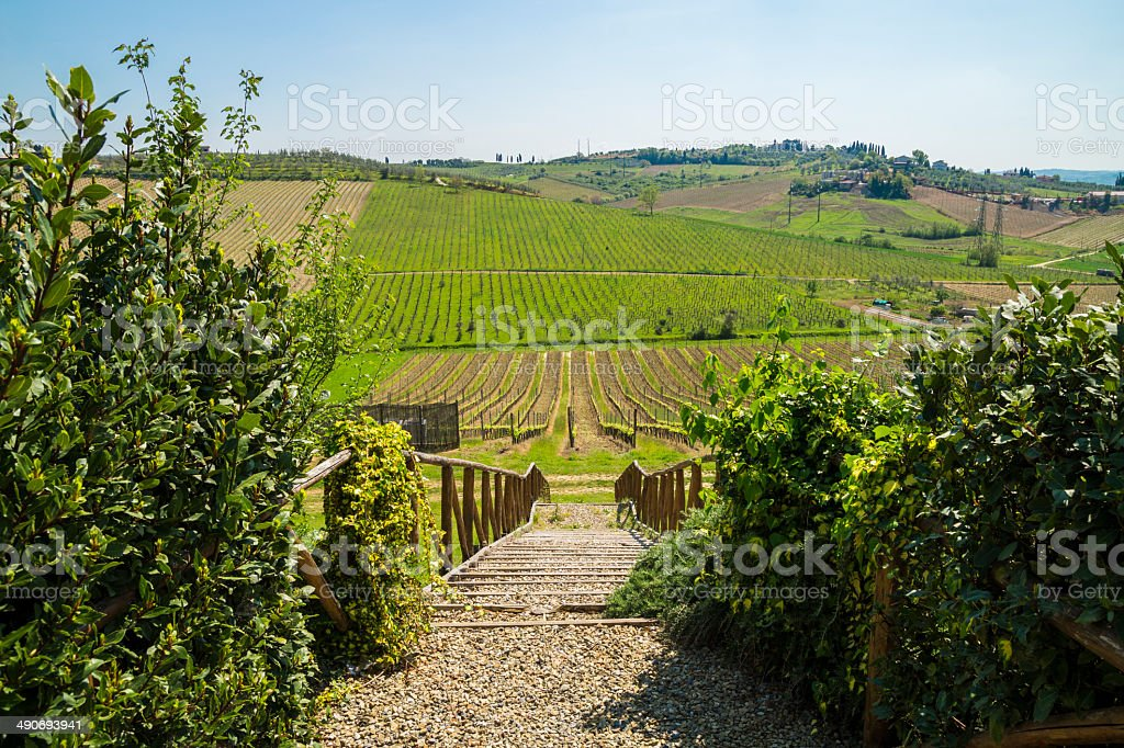 Vineyard in Tuscany, Chianti Hill, Florence royalty-free stock photo