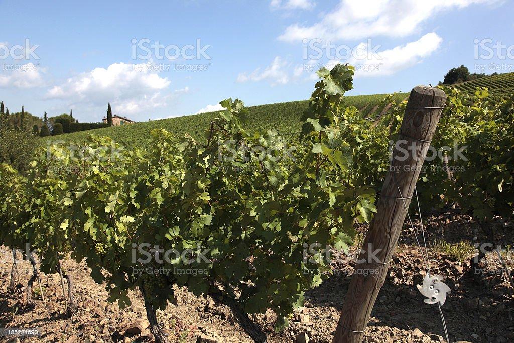Weingut in der Toskana – Foto