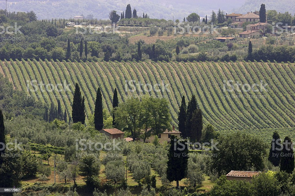 Vineyard in Tuscany royalty-free stock photo