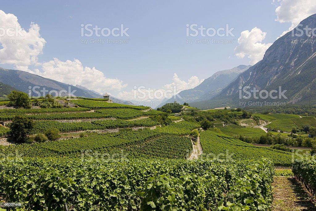 Vignoble de Wallis, Suisse - Photo