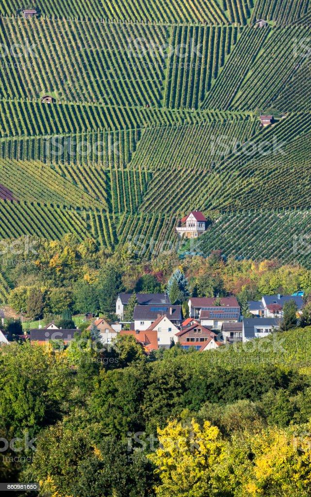 Vineyard in Weinsberg near Heilbronn Germany stock photo