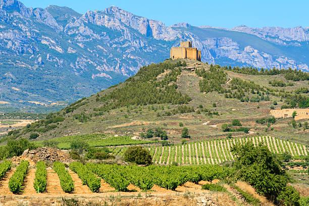 Vineyard, La Rioja (Spain) stock photo