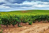 Vineyard, La Rioja. Spain