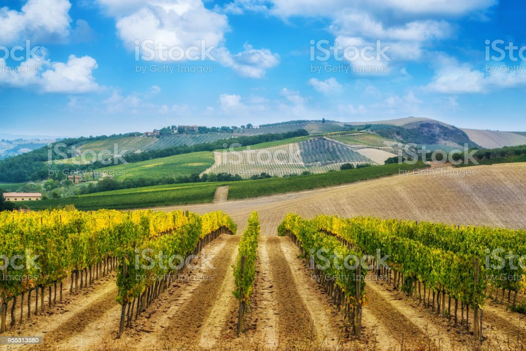 Vineyard Landscape In Tuscany Italy Stock Photo & More Pictures of