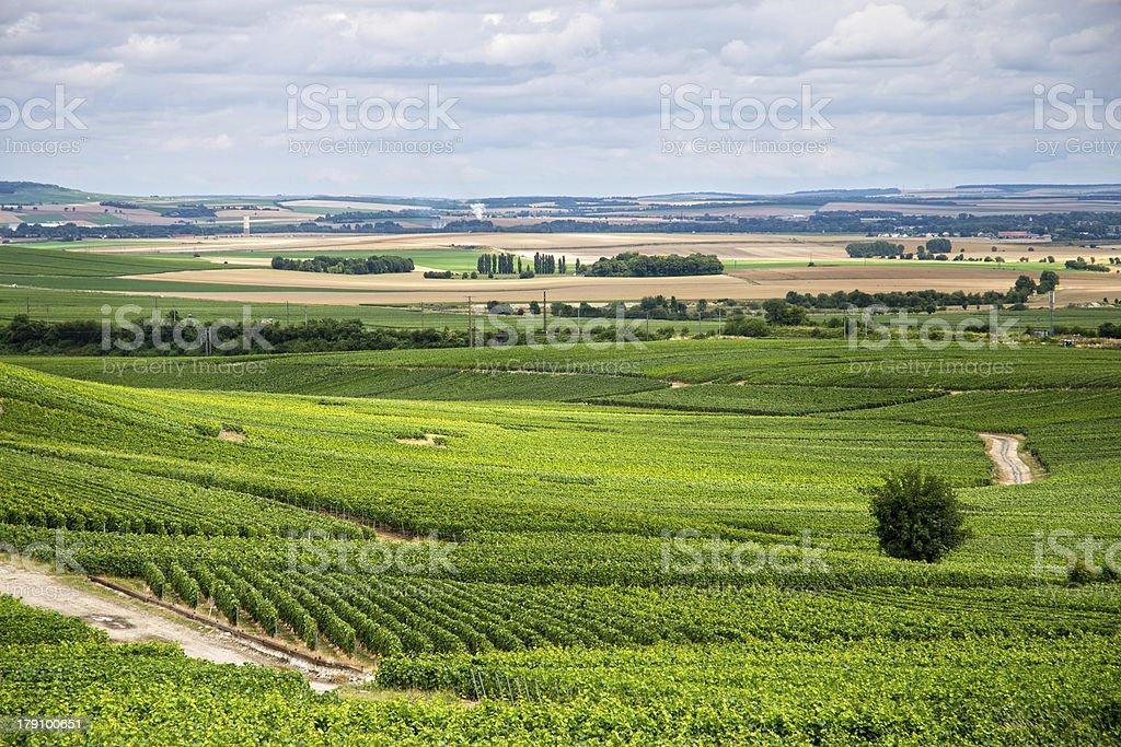 Vineyard landscape, Montagne de Reims, France royalty-free stock photo