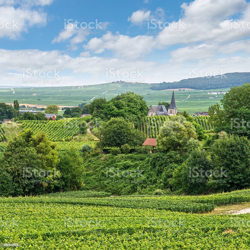 Vineyard landscape, Montagne de Reims, France stock photo