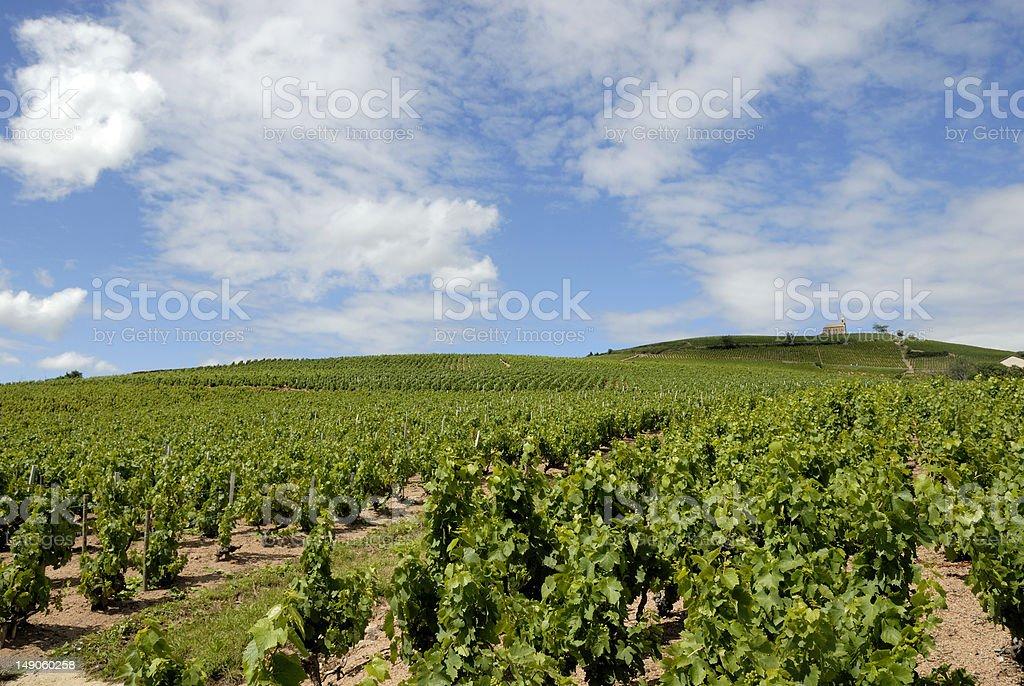 Vignerons fleurie beaujolais