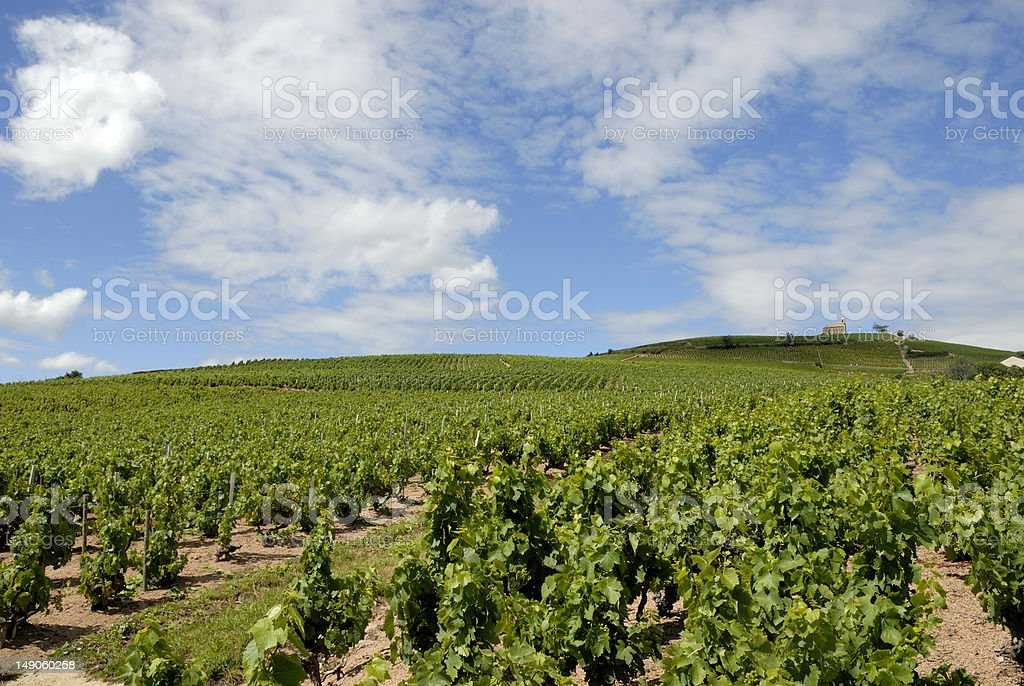 Vineyard Landscape near Fleurie in  the Beaujolais area stock photo