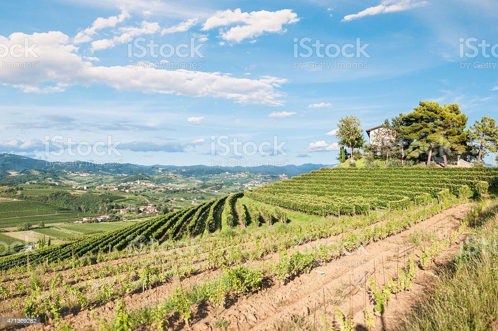 Vineyard landscape panorama in Collio, Friuli, Italy stock photo