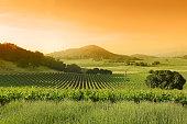 istock Vineyard landscape 155444728