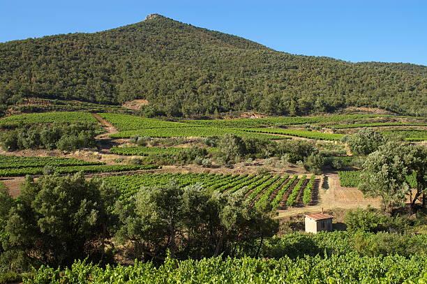 Vineyard landscape  var stock pictures, royalty-free photos & images