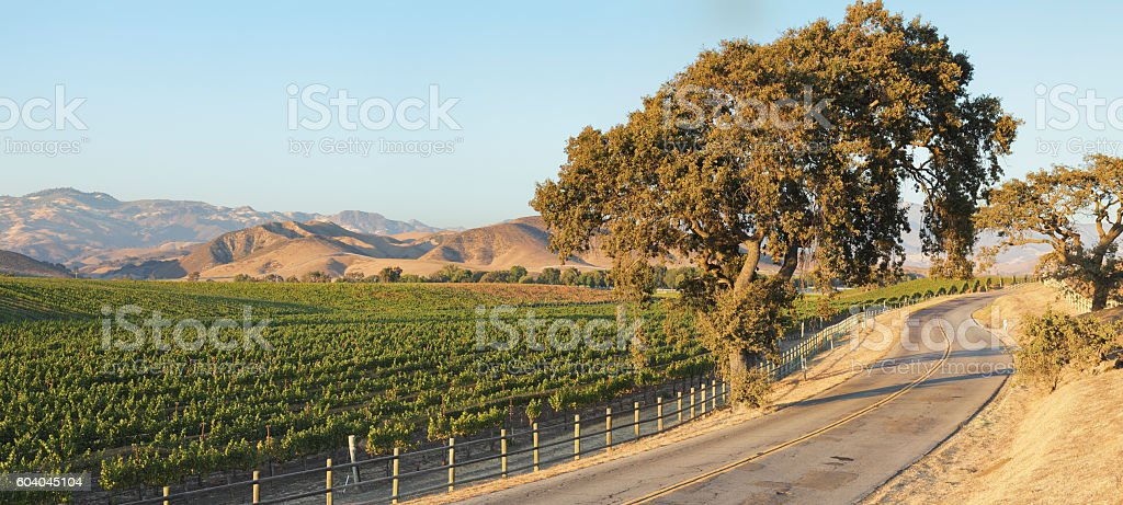 Vineyard Landscape - Summer stock photo
