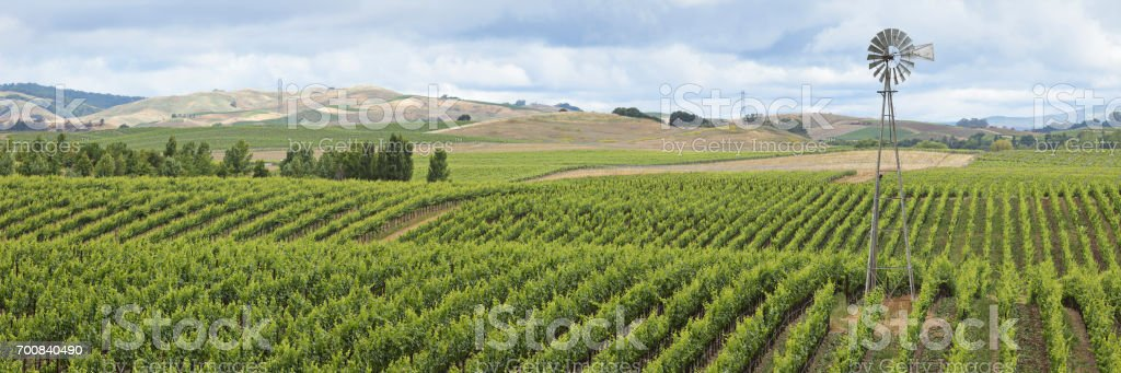 Vineyard Landscape + Windmill stock photo