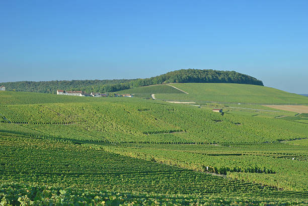 Vineyard Landscape,Champagne region,France Vineyard Landscape near Epernay in Champagne region,France epernay stock pictures, royalty-free photos & images