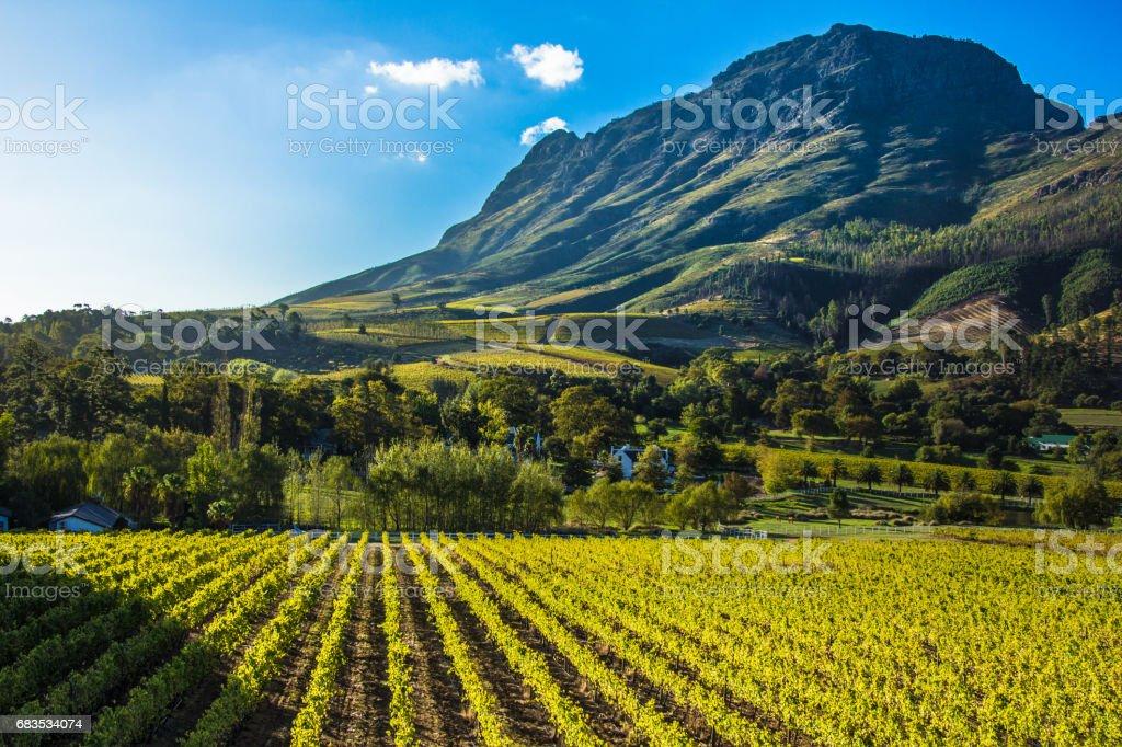 Vineyard mountian stock photo