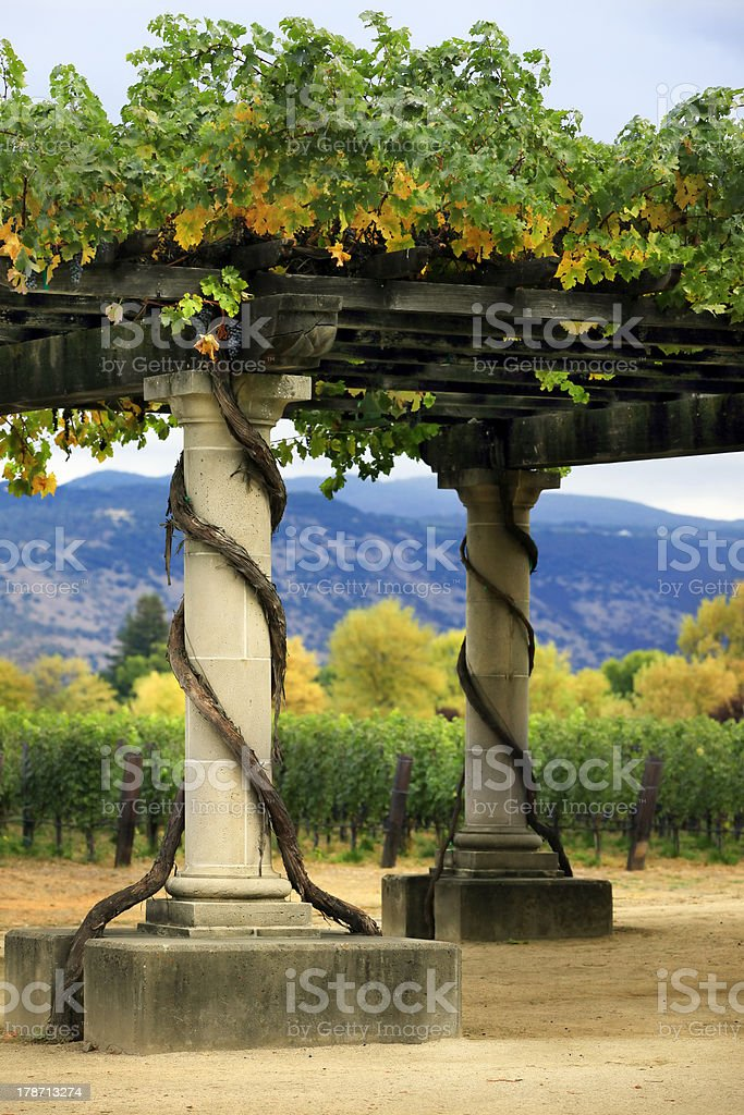 Vineyard Napa in California. royalty-free stock photo