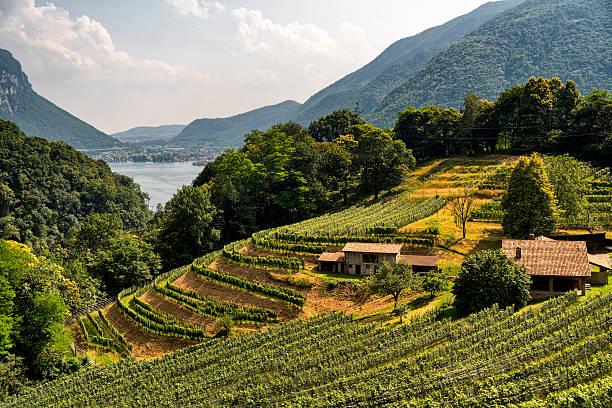 Vineyard near Arogno (Ticino, Switzerland) - foto de acervo