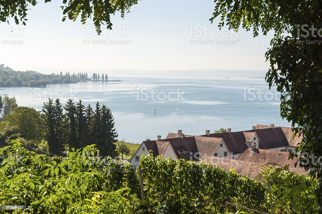Vineyard near Birnau, at Lake Constance, Southern Germany stock photo