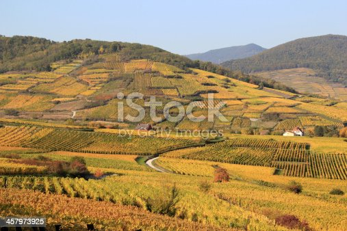 Landscape of the wonderful Alsatian vineyard