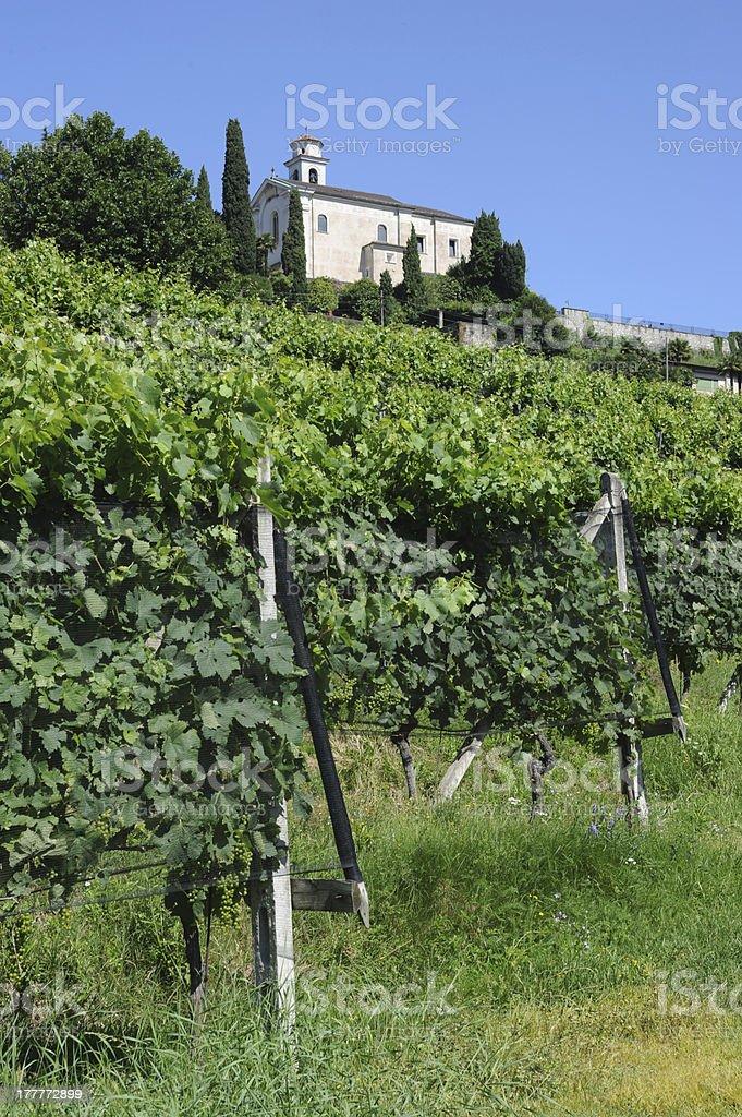 Vineyard of Porza near Lugano royalty-free stock photo