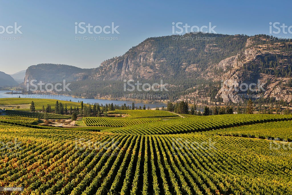 vineyard okanagan valley mcintyre bluff vasuex lake stock photo