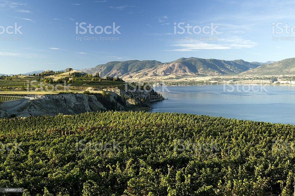 vineyard okanagan valley penticton naramata winery stock photo