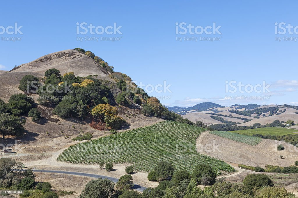 Vineyard on a hill royalty-free stock photo
