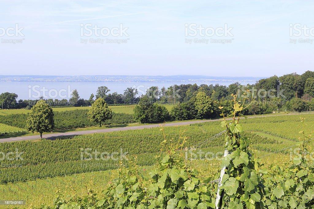 Vineyard on Lake Constance stock photo